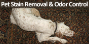Pet Stain Removal & Odor Control